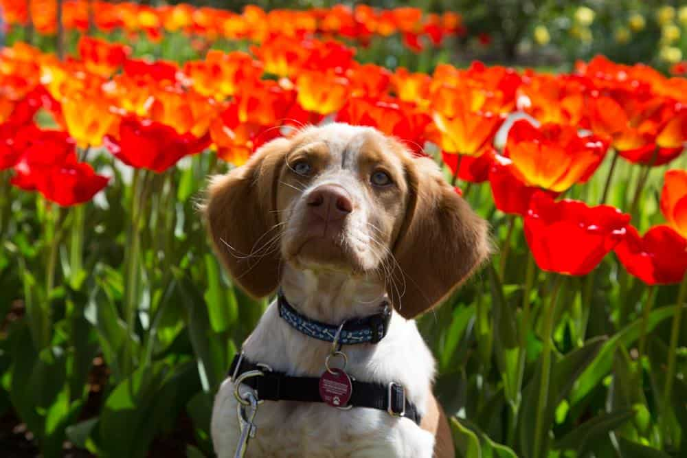 The Netherlands' Pet Friendly Keukenhof Gardens | GoPetFriendly.com