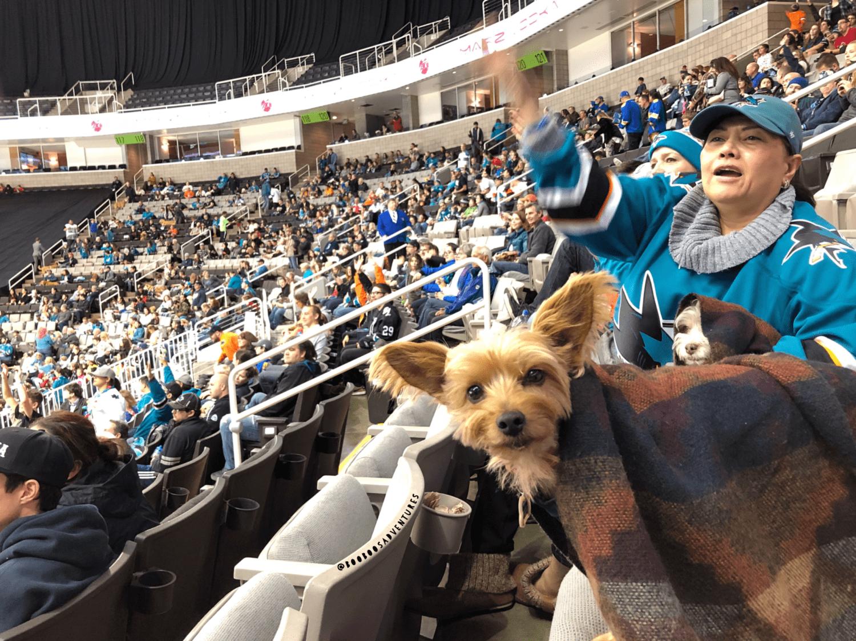 Dog Friendly Hockey Games 2017/2018 Season | GoPetFriendly.com