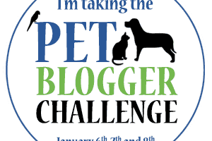 Pet Blogger Challenge Coming January 6-8th | GoPetFriendly.com