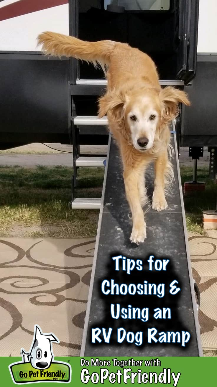 A Golden Retriever using an RV dog ramp