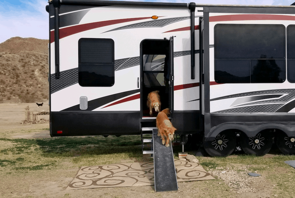 Tips For Choosing & Using An RV Dog Ramp