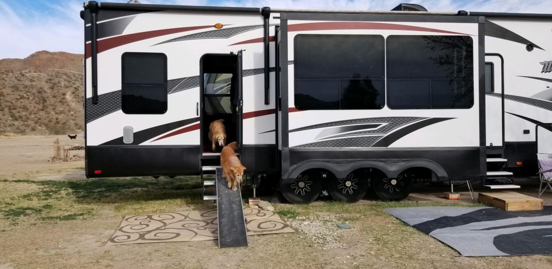 Two Golden Retrievers using an RV dog ramp