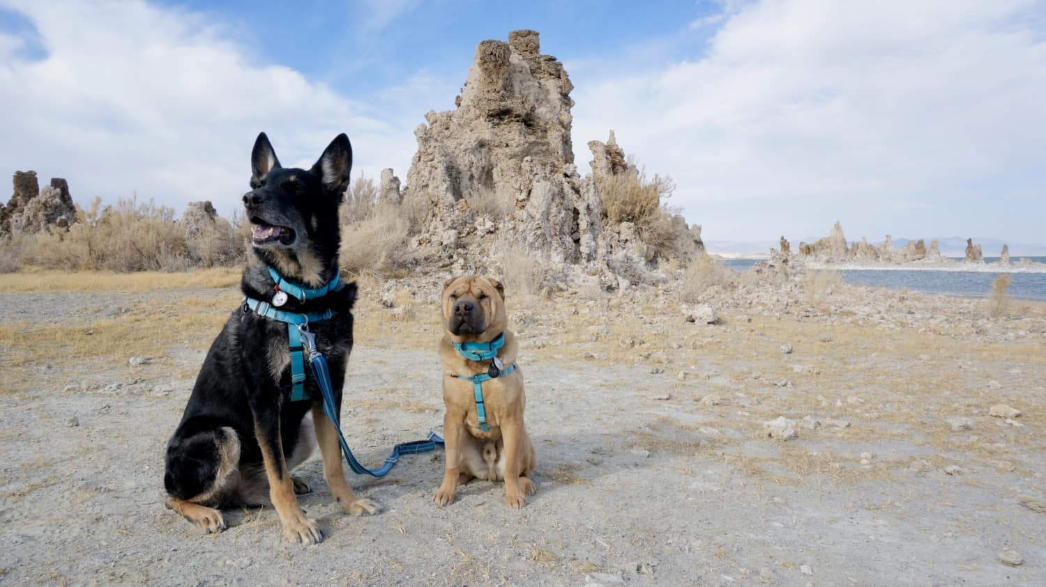Visiting California's Mono Lake with Dogs