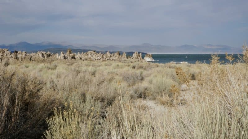 Visiting California's Mono Lake with Dogs | GoPetFriendly.com