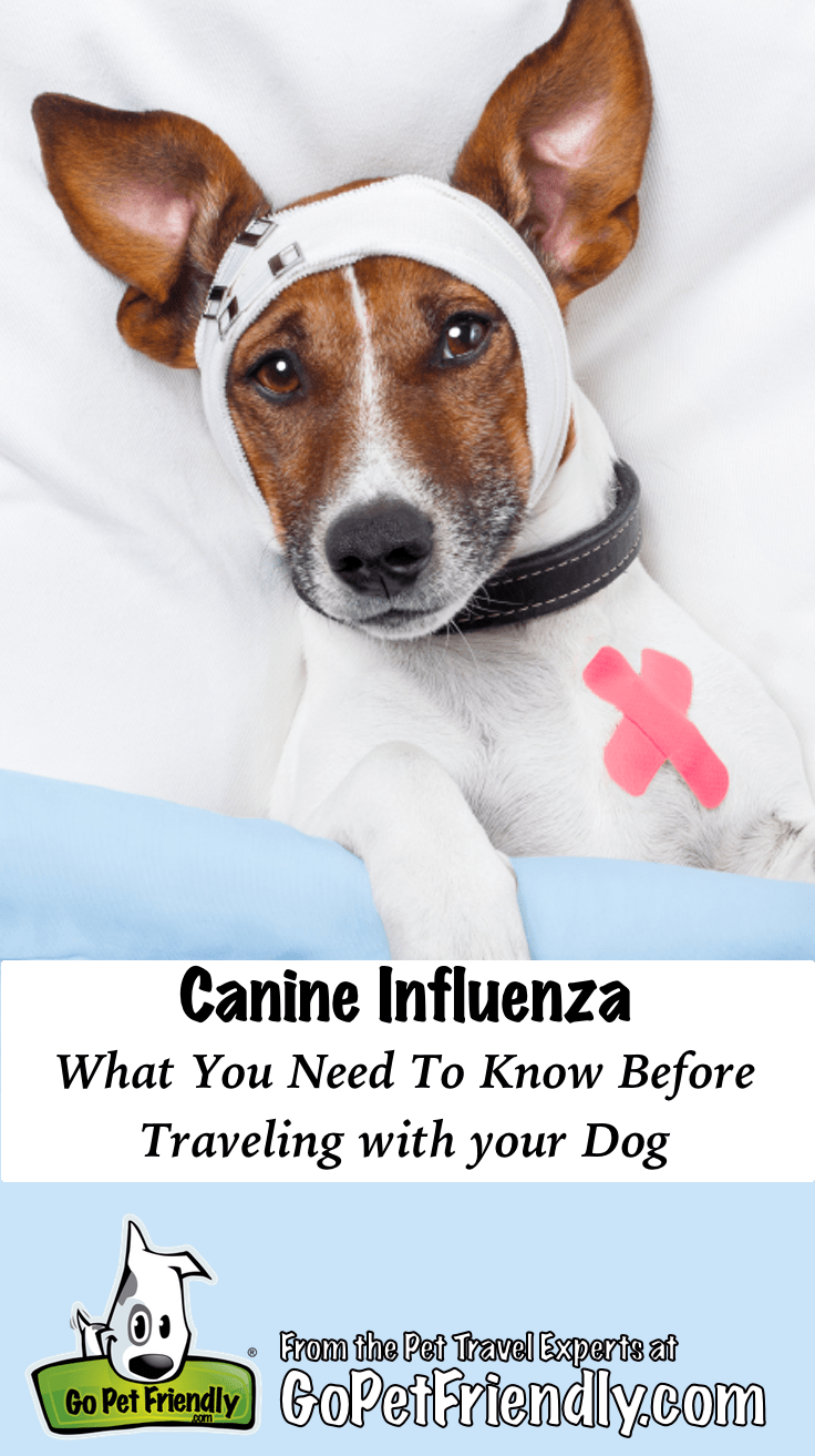 Canine Influenza: What You Need to Know Before Traveling With Your Dog | GoPetFriendly.com