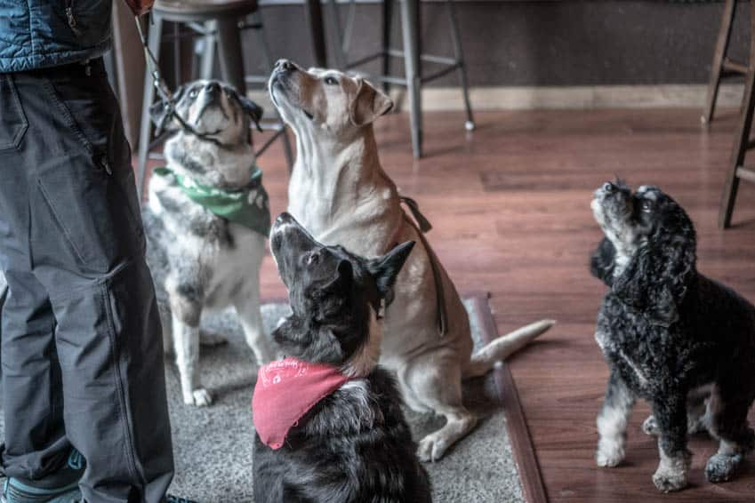 Sora and her new friends at Middleton Brewing in Everett, WA