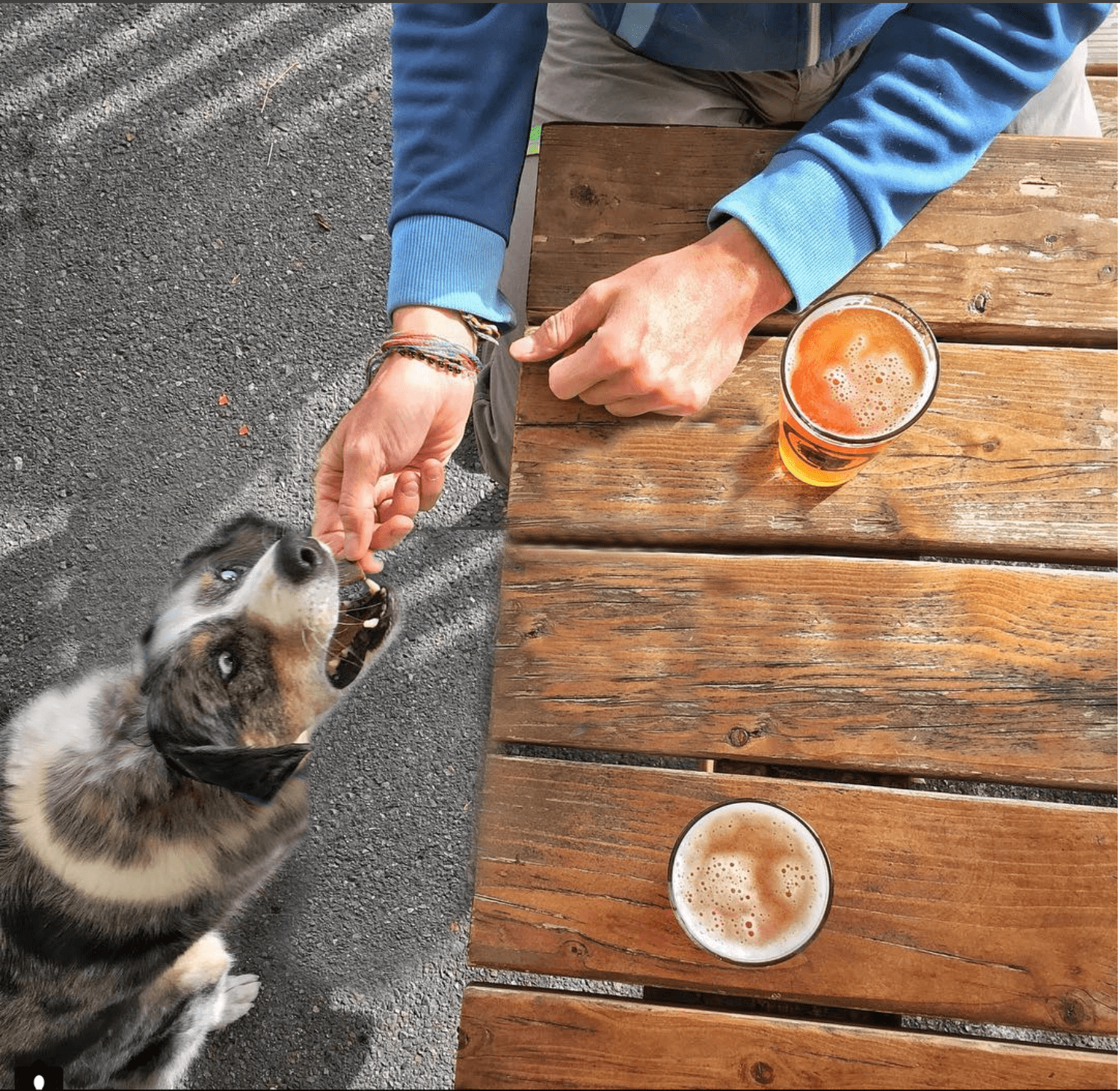Sora snags a treat while Jen and Dave enjoy the beer garden at the Hop and Hound in Bothell
