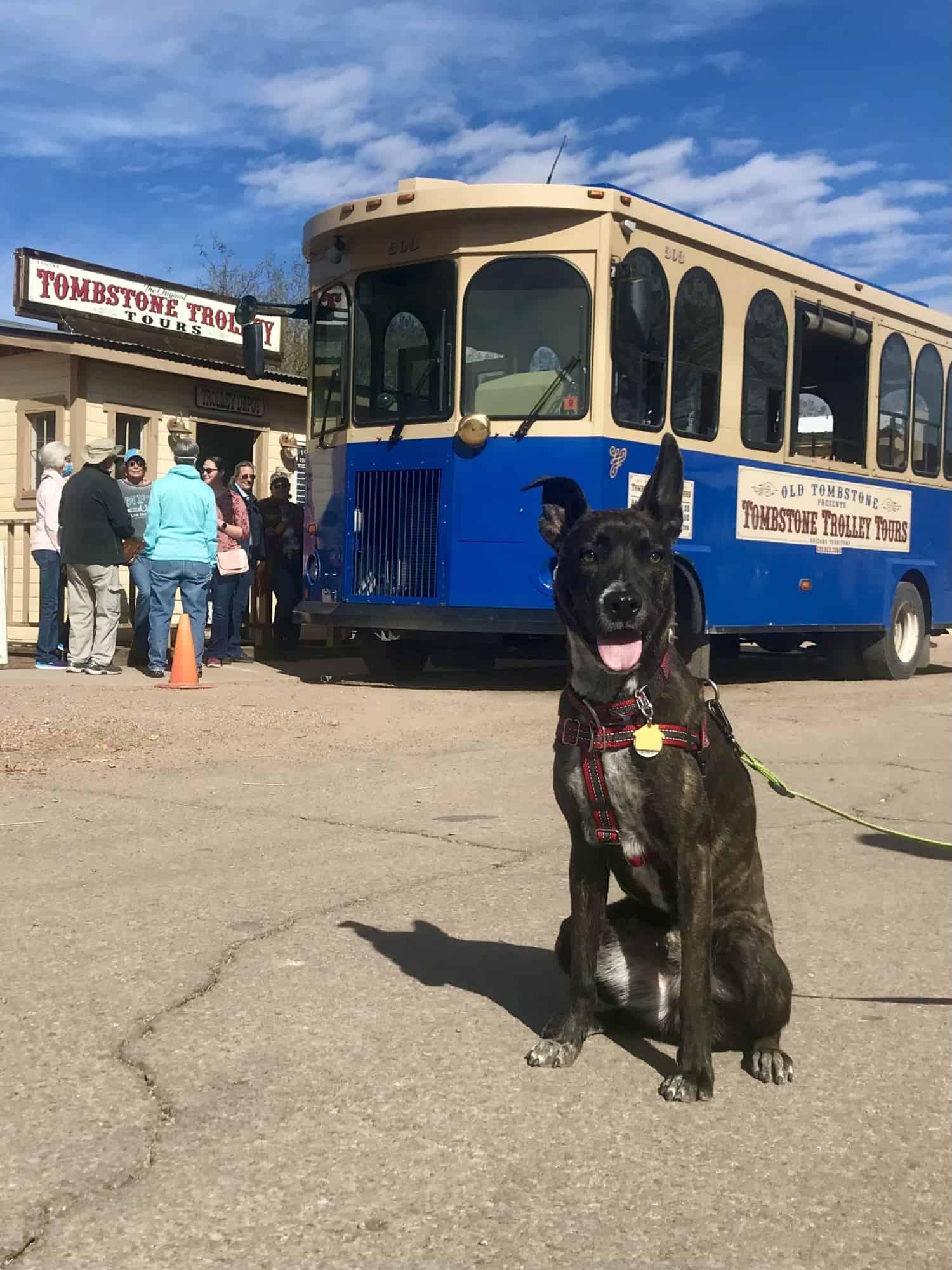 Brindle dog sitting near a pet friendly trolley car in Tombstone, Arizona