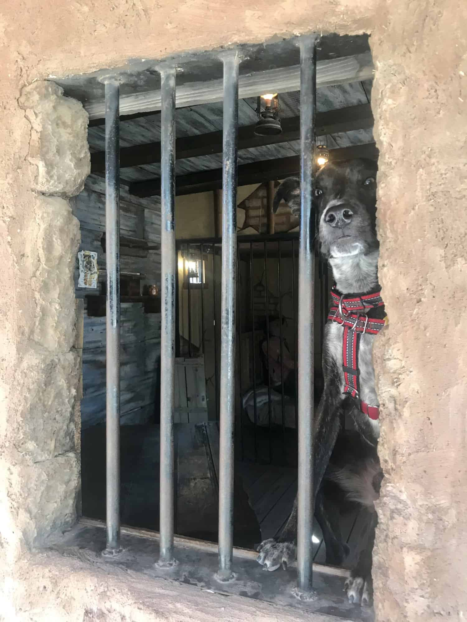Brindle dog looking through the bars of a jail-like window in Tombstone, AZ