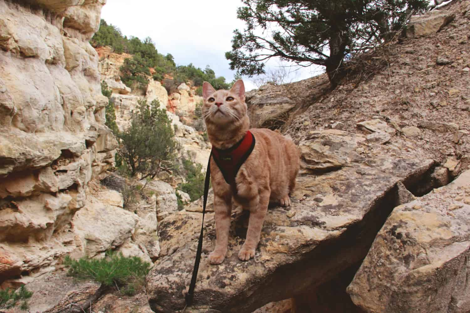 Personality Traits of Adventure Cats | GoPetFriendly.com