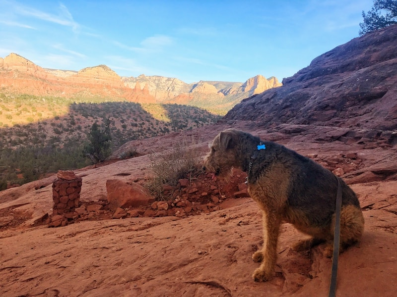 A dog hiking a pet friendly desert trail and enjoying the view of the red rock mountains in the distance