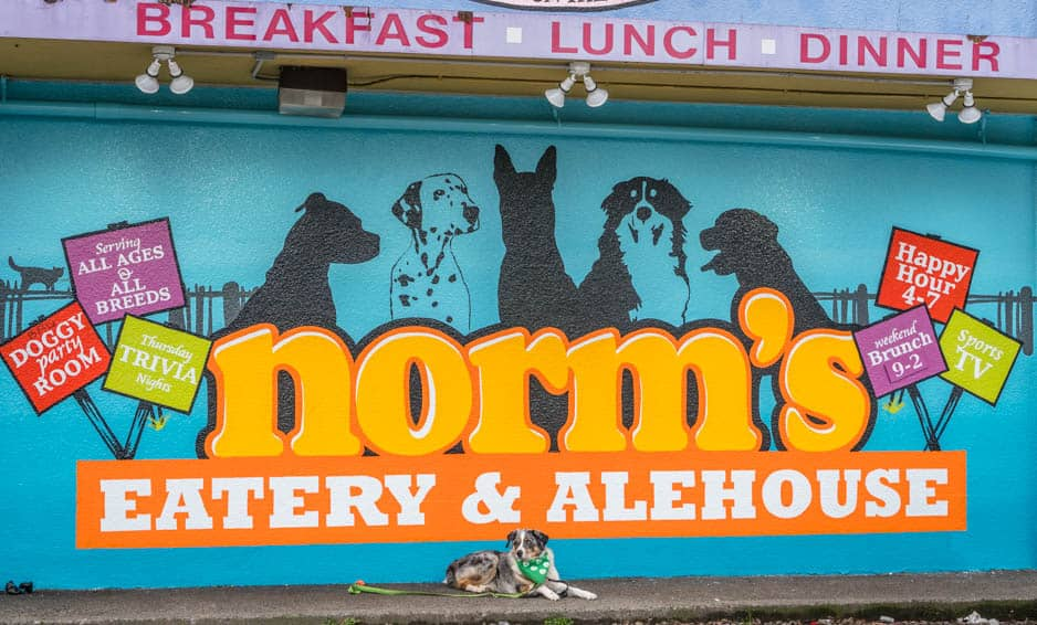 Sora poses below Norm's Eatery dog mural
