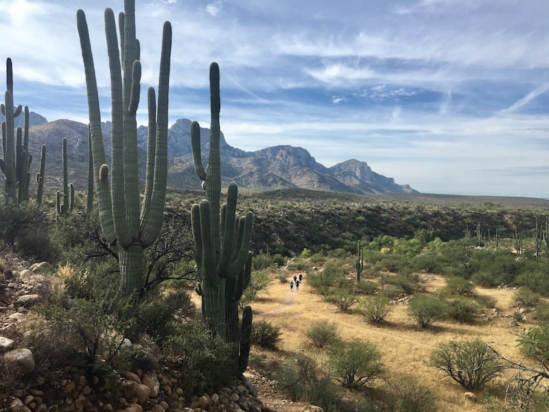 Catalina State Park Dog-Friendly Hiking Trail near Tucson