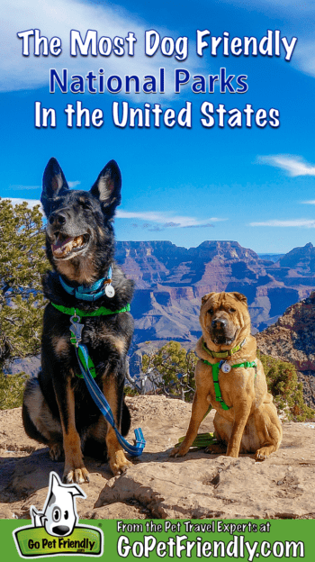 Ty the Shar-pei and Buster the German Shepherd from GoPetFriendly.com at pet-friendly Grand Canyon National Park