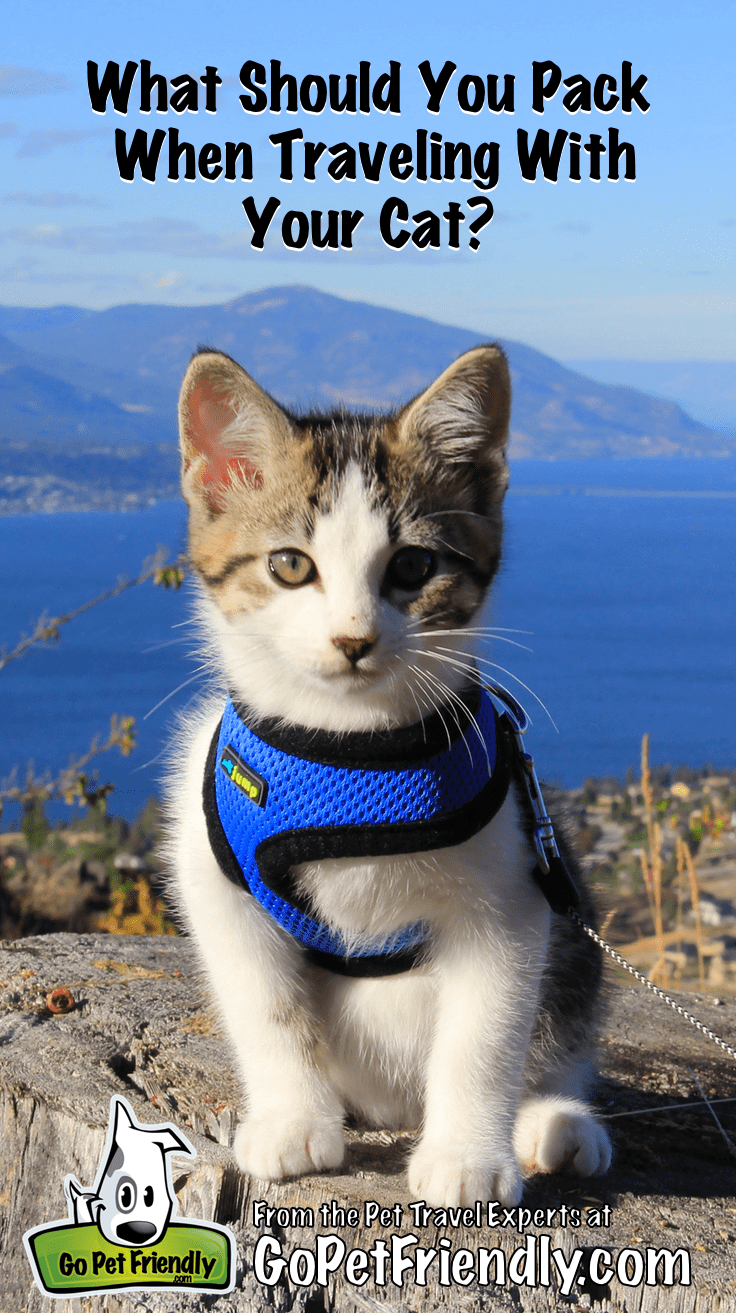 What Should You Pack When Traveling With Your Cat? | GoPetFriendly.com