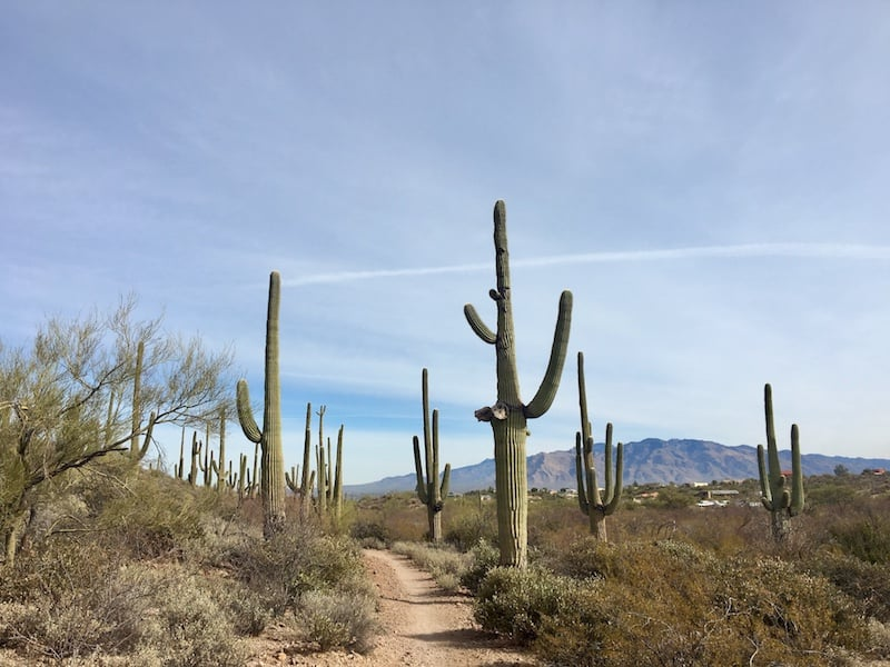 Sweetwater Preserve - Dog-Friendly Hiking near Tucson