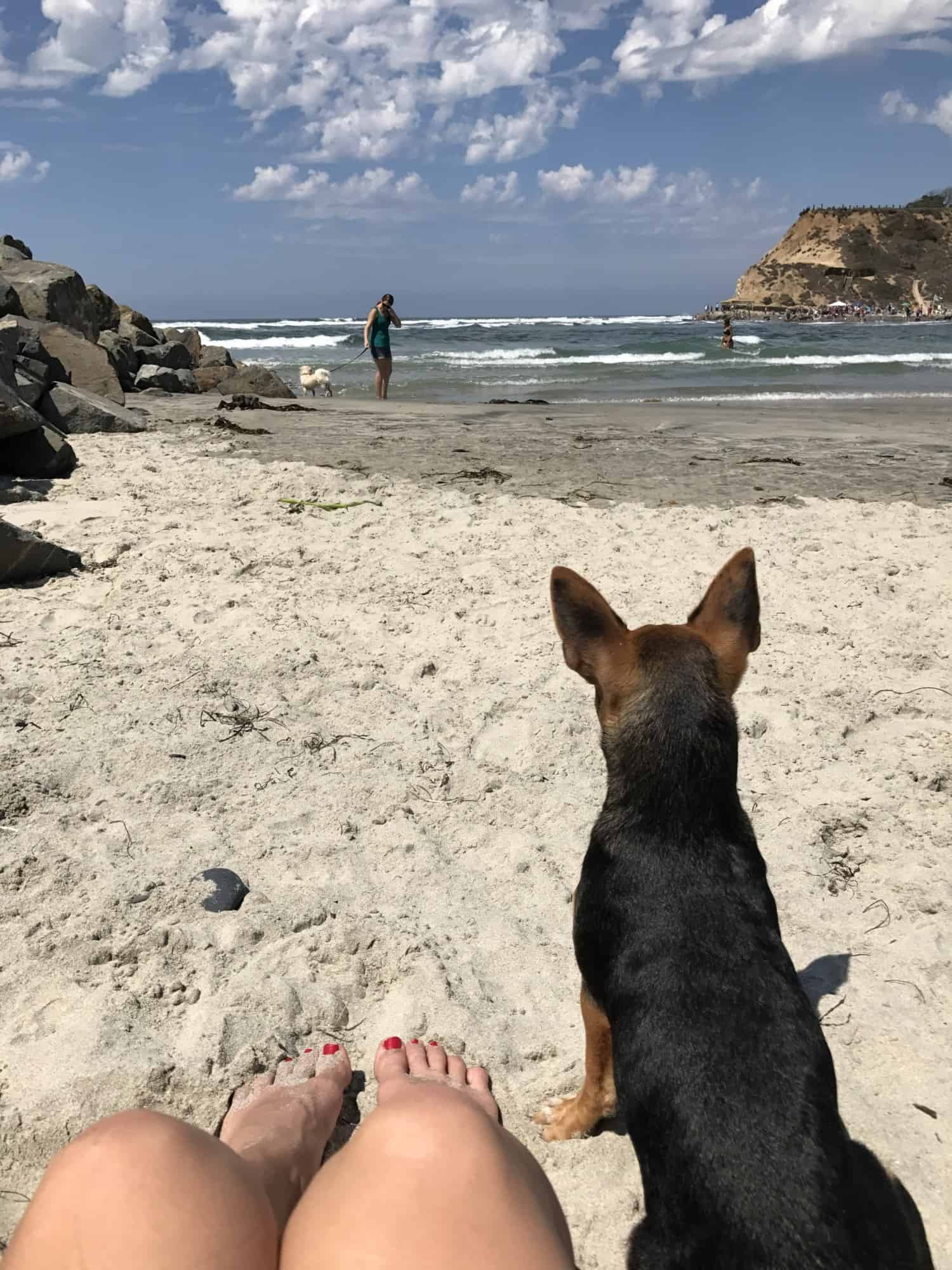 Top Dog Beaches in San Diego | GoPetFriendly.com