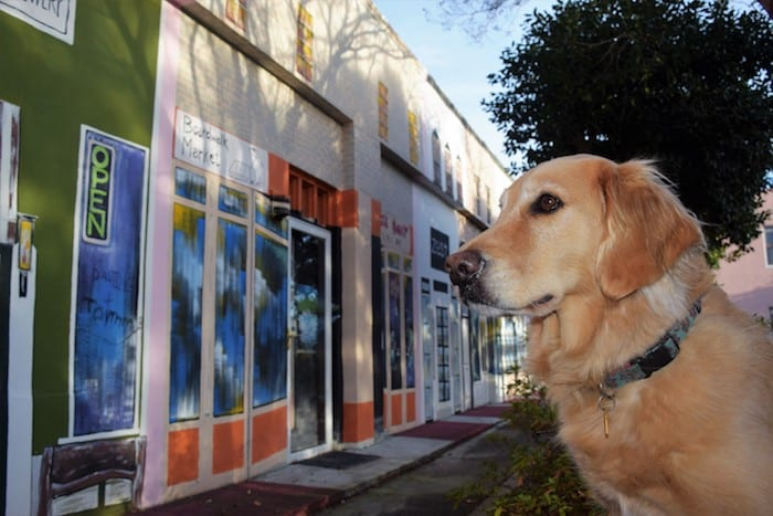 Honey the golden retriever checks out the storefront mural in Georgetown, South Carolina | GoPetFriendly.com