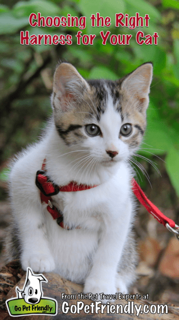 Choosing the Right Harness for Your Cat | GoPetFriendly.com