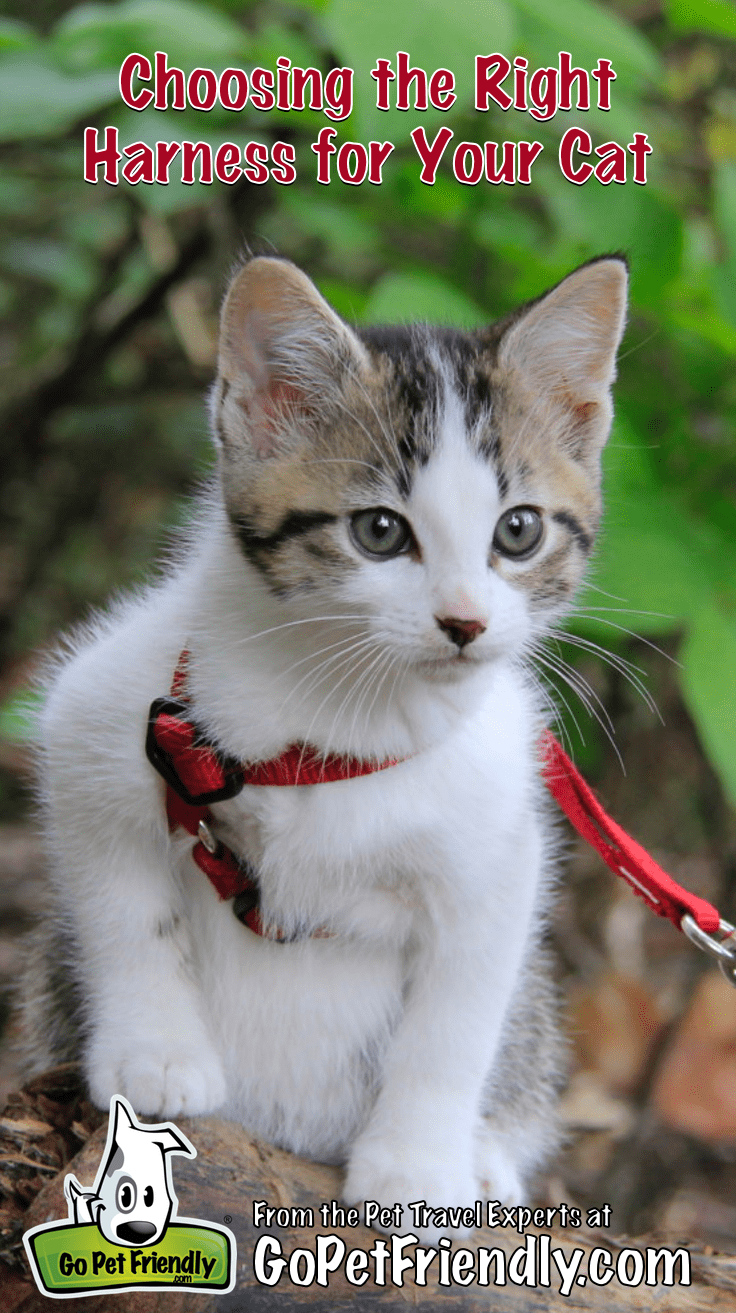 Chips the kitten on a log wearing a red cat harness