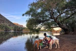 Hiking With Your Dog East of Phoenix