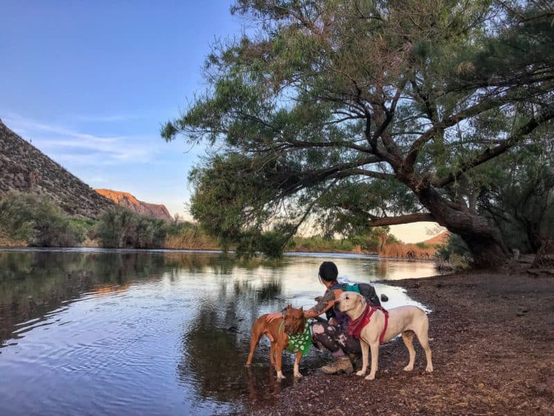 Dog Friendly Hiking Near Phoenix