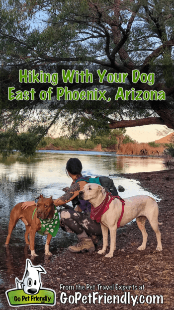 Hiking With Your Dog East of Phoenix | GoPetFriendly.com