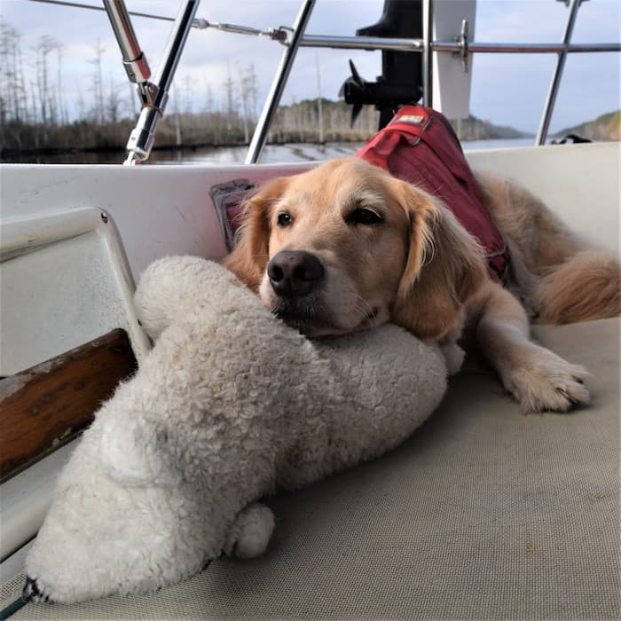 Honey the golden retriever stays home on the boat. | GoPetFriendly.com