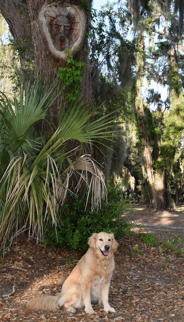 Honey the golden retriever poses with one of the tree spirits in St. Simons Island.