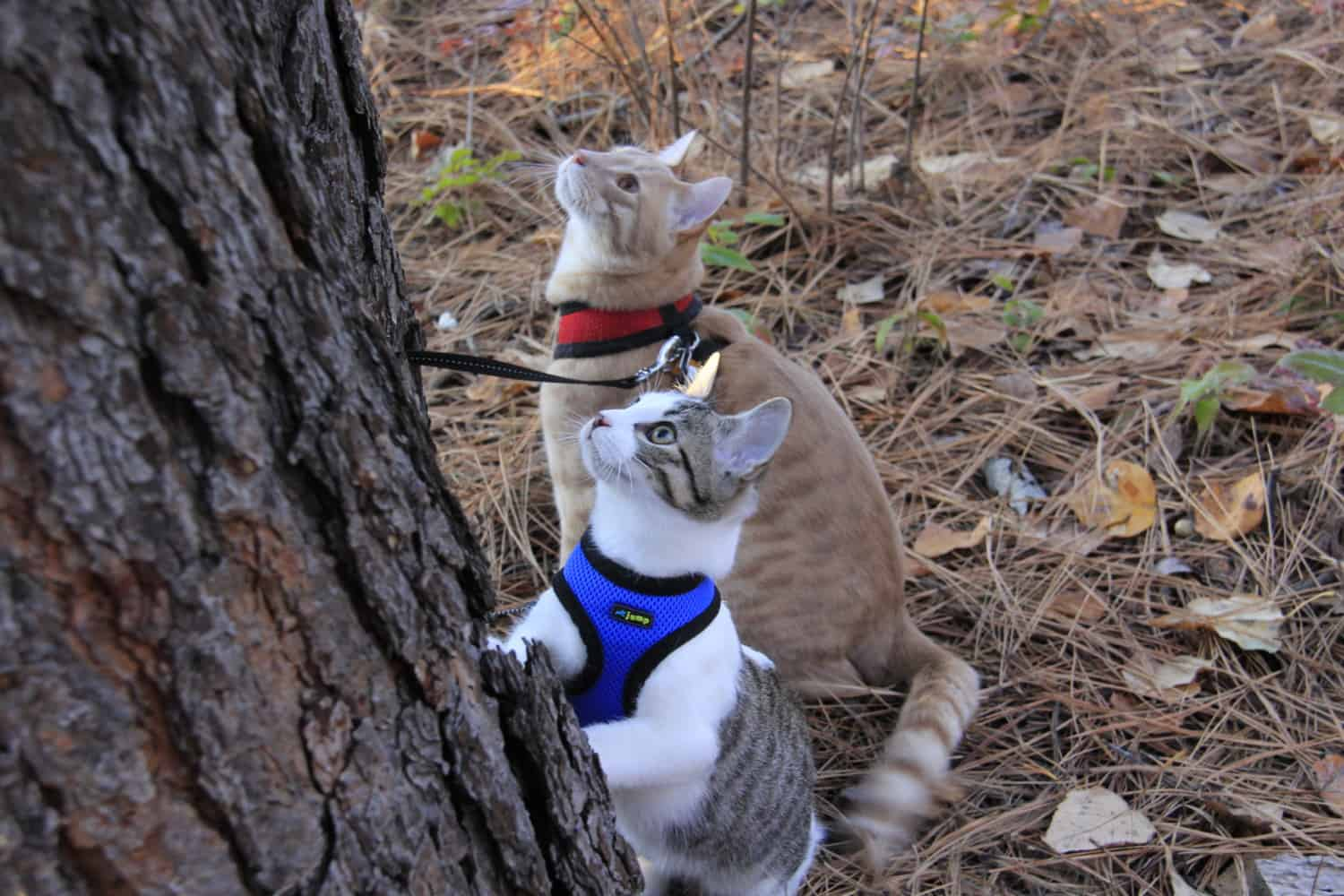 Choosing the Right Harness for Your Cat