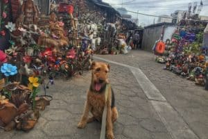 Traveling with Your Dog to Mexico | GoPetFriendly.com