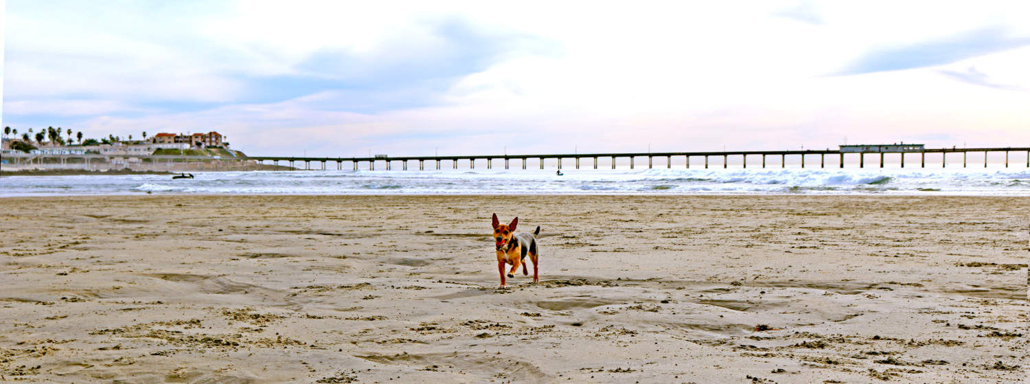 Top 14 Pet Friendly Places In Santa Monica