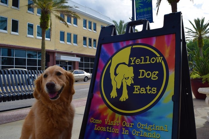 Honey the golden retriever at Yellow Dog Eats in New Smyrna Beach.