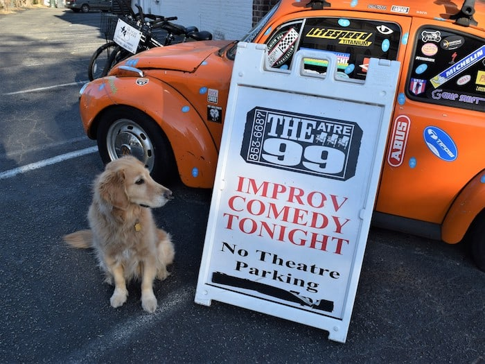 Honey the golden retriever wonders if she should try her paw at improv.