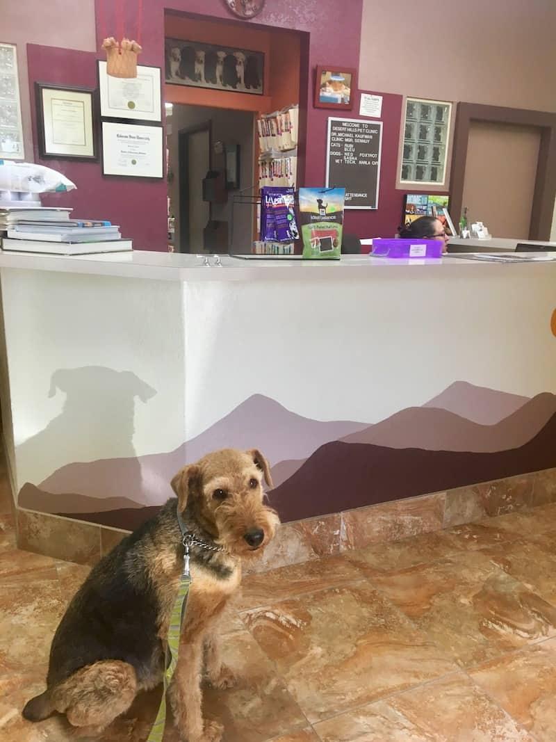 Pet Travel Preparation