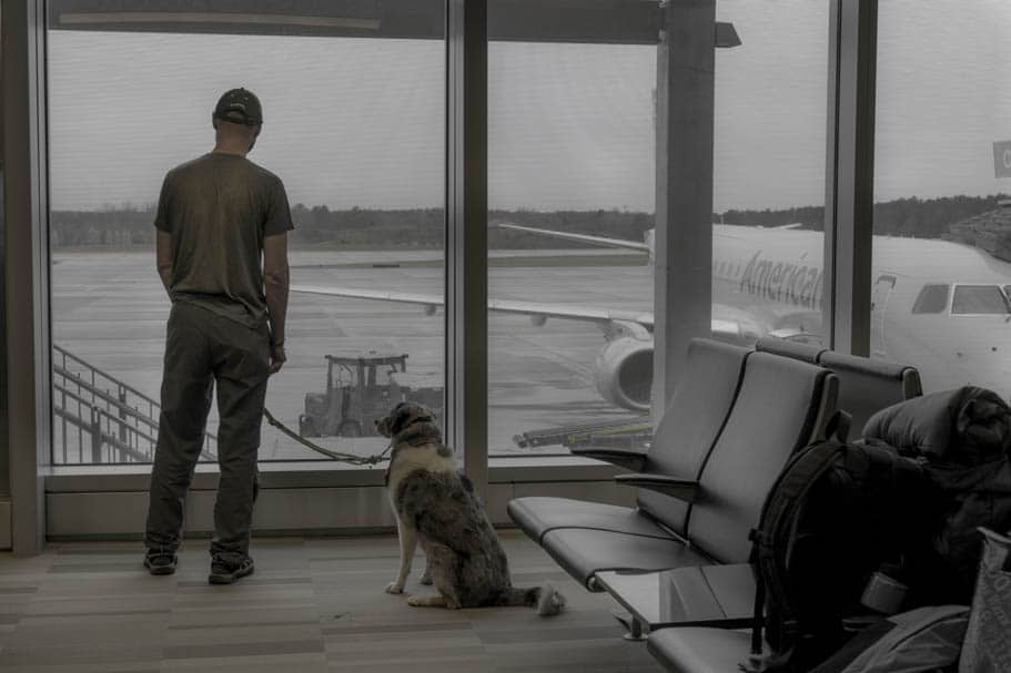 9 Tips for Flying with a Pet | GoPetFriendly.com