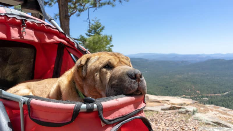 Aspen Campground Review - Apache-Sitgreaves National Forest, Arizona | GoPetFriendly.com