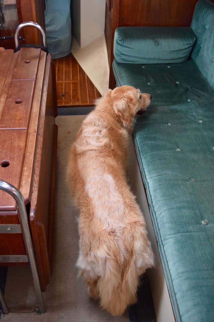Honey is unable to turn around in the narrow aisle of the sailboat.