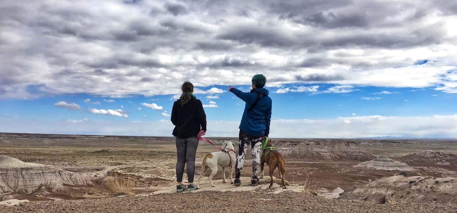 Petrified Forest National Park Is Truly Pet Friendly