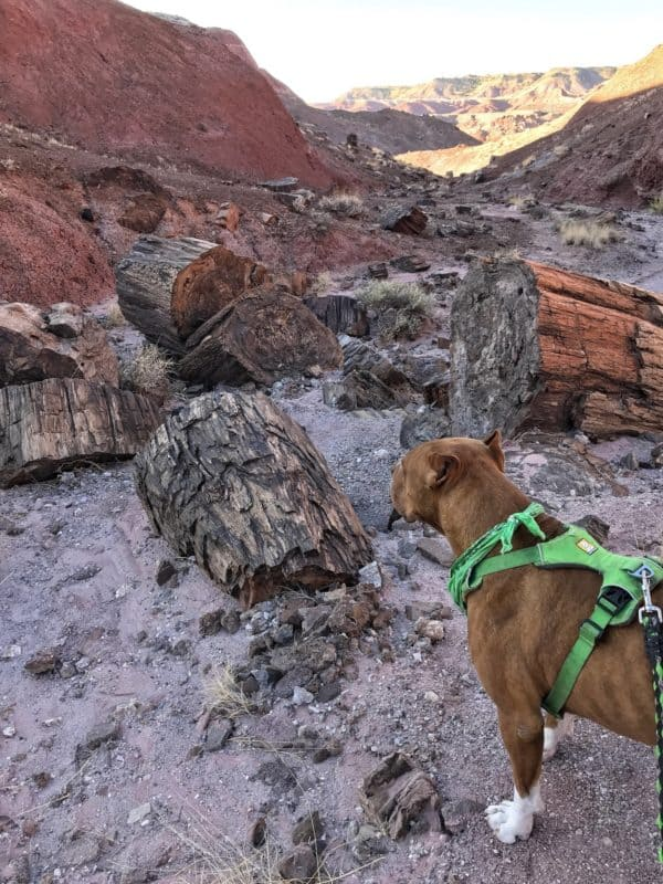 Petrified Forest National Park Is Truly Pet Friendly | GoPetFriendly.com