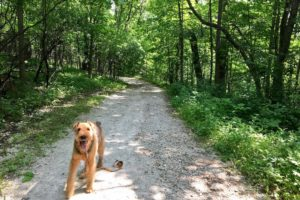 Dog-Friendly Hiking Near Chicago | GoPetFriendly.com