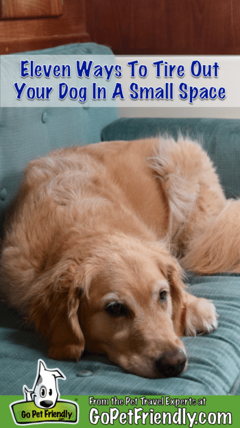 11 Ways To Tire Out Your Dog In A Small Space | GoPetFriendly.com