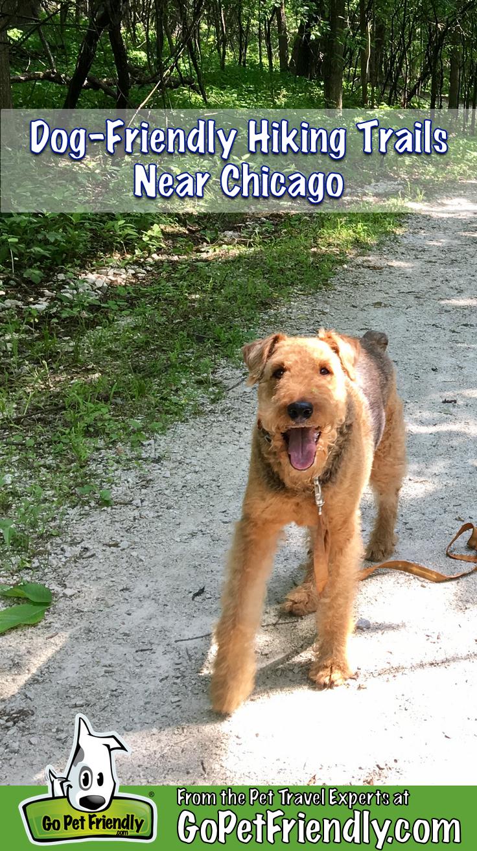 Dog-Friendly Hiking Near Chicago | GoPetFriendly.com
