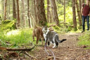 Commonly Asked Questions About Traveling with Adventure Cats