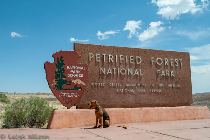 Pet Friendly National Parks and the B.A.R.K Ranger Program | GoPetFriendly.com
