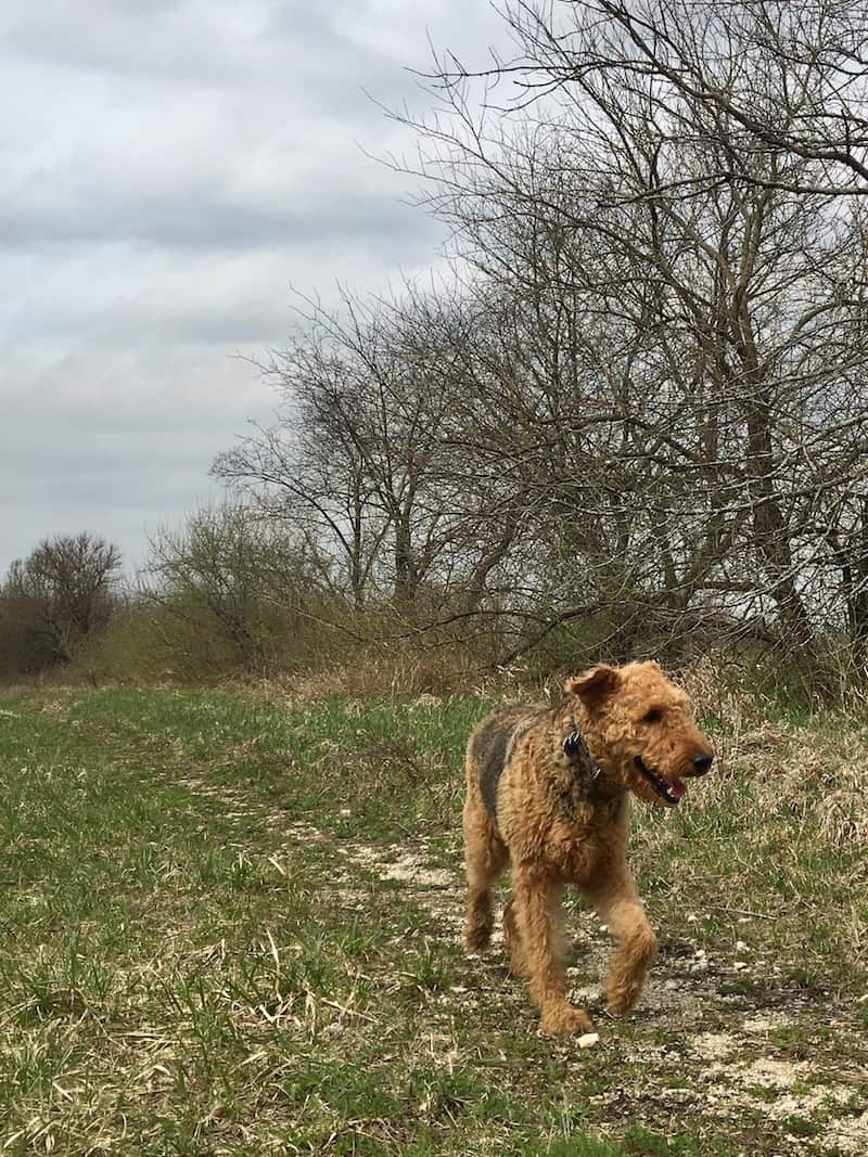 hiking with dogs off leash