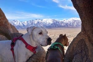 Adventuring in California's Alabama Hills with Your Dog