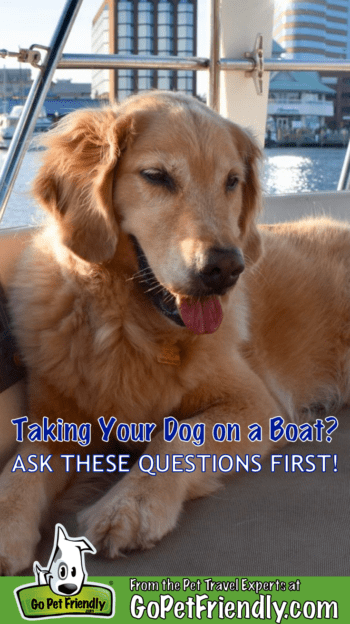 Taking Your Dog On A Boat? Ask These 5 Questions First   GoPetFriendly.com