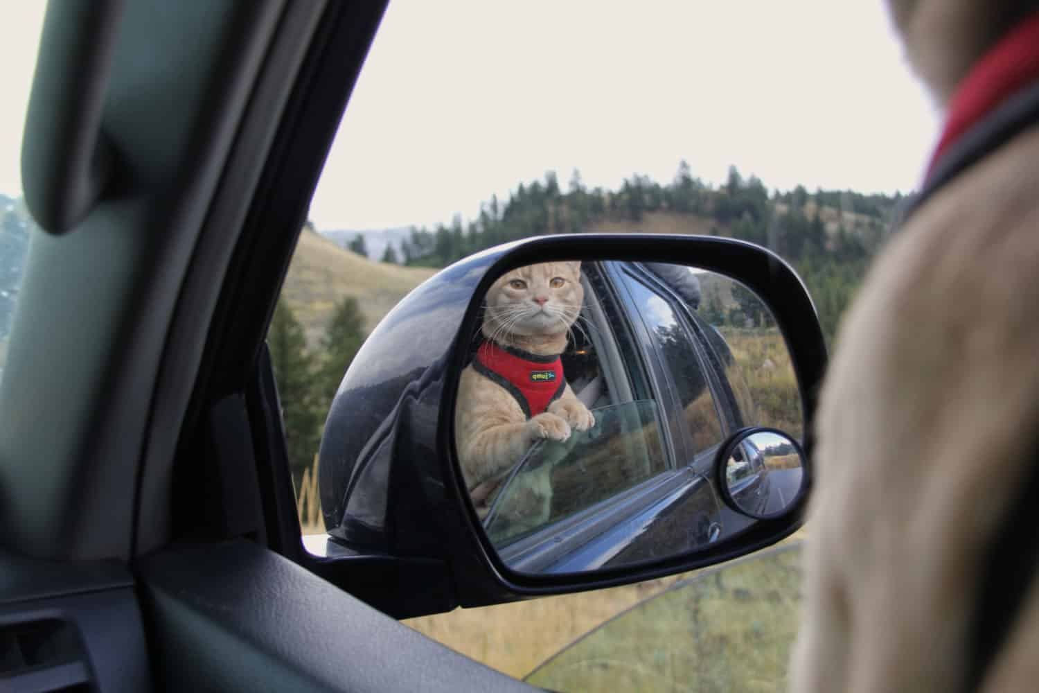 Tips and Trick for Road Tripping With Cats | GoPetFriendly.com