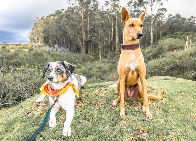 Planning Doggy Meetups On The Road   GoPetFriendly.com